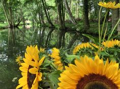der Laubwald im Labyrinth der Spreewaldfließe