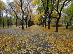 Park Praski