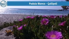 Padula Bianca - Gallipoli