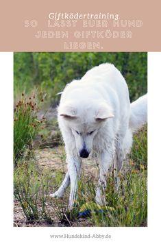 #Hund #Hundeblogger #Hundeliebe #Wissen #Hundetraining  Hunde || Erziehung || DIY || Wissen || Gesundheit