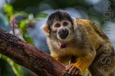 Monkey Business by Stem-Images ., via 500px