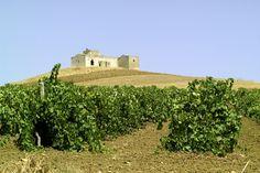 Un esempio delle nostre vigne