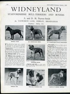 STAFFORDSHIRE BULL TERRIER OUR DOGS OLD 1948 DOG BREED KENNEL