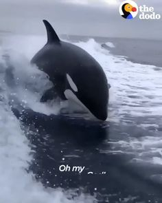Wow It's Amazing Orca Whales Jumps Man Filmed the live jumping of orca Whales. Cute Funny Animals, Funny Animal Videos, Cute Baby Animals, Nature Animals, Animals And Pets, Animals Sea, Delphine, Tier Fotos, Killer Whales