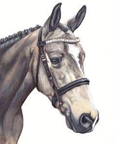 """Mi piace"": 882, commenti: 7 - Kate Spratt Equine Art (@kate_spratt_equine_art) su Instagram: ""'Tsar' details... 💙  www.katesprattart.com  #katesprattart #portraitartist #pencilart #horsesofig…"""