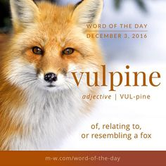 The word of the day is vulpine