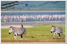 Fazer um Safari na Tanzânia é o principal interesse da maioria dos viajantes que procuram o país para uma viagem de férias. Os parques da Tanzânia estão entre os melhores de toda a África, devido a diversidade de animais e grande probabilidade de encontrar os Big Five (Leão, búfalo, rinoceronte, leopardo e elefante). Outra grande atração é a migração dos gnus (Wild Beasts em inglês), que cruzam o Serengeti National Park em busca de um lugar melhor para se alimentar.