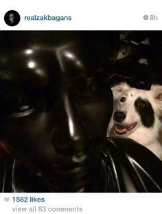 Gracie.the dog's zac