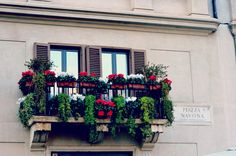 Piazza Navona balcony flowers in Rome, Italy.
