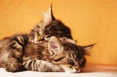 Sleep Deeply...