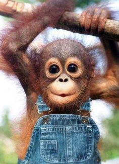 Reasons why #monkeys are the best #animals on #earth! See the full list here.