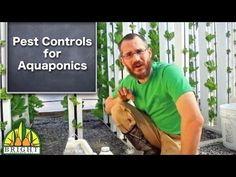 ▶ Pest Controls for Aquaponics - YouTube