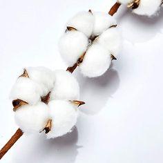 Cotton Blossom, Cotton Plant, Cotton Wreath, Amazon Art, Fall Season, Picture Wall, Farmhouse Style, Eco Friendly, Things To Come
