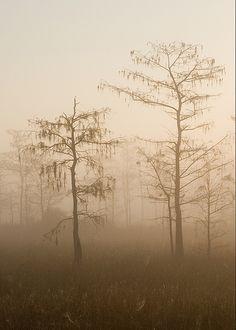 Foggy Sunrise - Big Cypress National Preserve, Florida