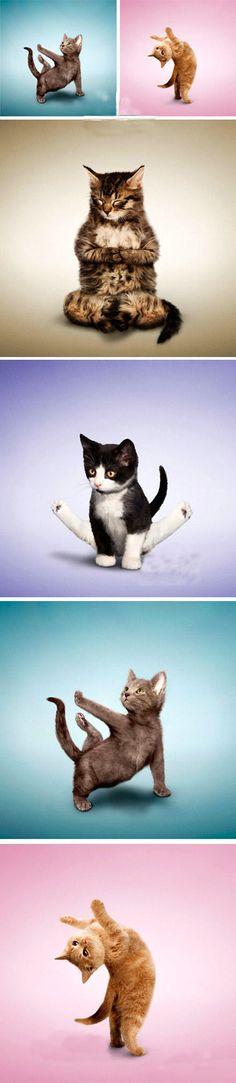 kitty yoga - para los que nos gusta hacer yoga