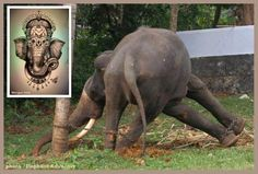 Please sign this new Change.org petition addressing the Government of India to ban the use of temple elephants http://www.change.org/petitions/government-of-india-ban-temples-from-holding-living-ganesha-elephants --Posted to DESERT HEARTS Animal Compassion -  Phoenix, Arizona --12/15/2013 https://www.facebook.com/desertheartsphoenix