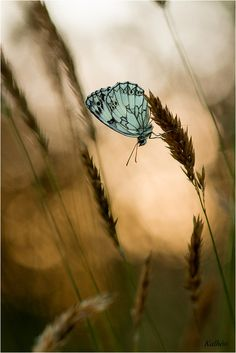 butterfly by florence Kalheo on 500px