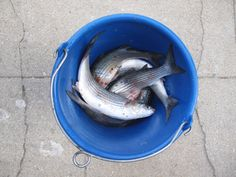 my son and my father in  law's fishing bucket - bretagne - photo Julie Ansiau