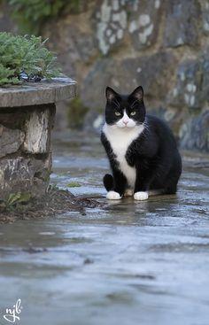 "cat <span class=""EmojiInput mj230"" title=""Black Heart Suit ::hearts::""></span>"