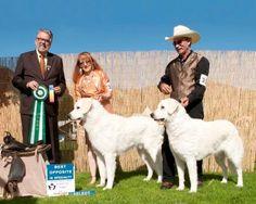 Redmoon's Reg'd Kuvasz, Kuvasz, Puppies, Breeders, Barriere, BC, Canada
