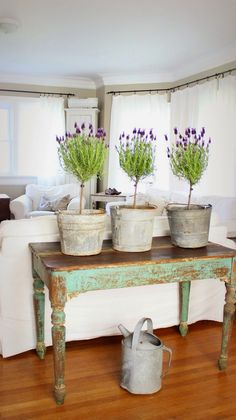 Bring Spring Inside! Lavender topiaries in rustic buckets are match made in heaven!