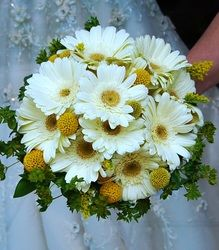 White gerbera daisies and craspedia