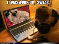 funny dog pictures - IT WAS A POP-UP, I SWEAR