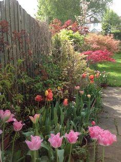 My friend Sue's beautiful garden!