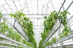 Powered by a team of urban agriculture consultants. Your source for urban and vertical farming news, business, and design. Greenhouse Frame, Greenhouse Growing, Urban Agriculture, Urban Farming, Vertical Farming, Thing 1, Hydroponics System, The Hague, Growing Flowers
