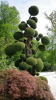 Agatha O | #gardendesign #topiary:
