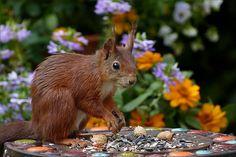 Top 50 Squirrel pictures