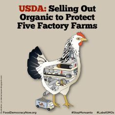 "USDA sells out once again! The USDA refuses to implement its own advisory board's animal welfare recommendations. These recommendations would not have required ""good"" conditions, but they would have set a reasonable floor by requiring improvements from the five massive ""organic"" egg farms that provide the worst hen welfare. Read more: http://www.huffingtonpost.com/bruce-friedrich/usda-selling-out-organic-_b_5072263.html #organic #organiceggs #food #eggs #animalwelfare"