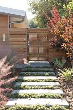 The stylish side entrance to the renovated Eichler home features a paver footpath with drought tolerant ground cover between them and border plantings of ornamental grasses and other attractive low maintenance vegetation.
