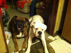 #LOSTDOG 1-10-14 #AKRON #OH NORTHSIDE #NORTHHILL 2-3 YEAR OLD MALE REDDISH BROWN BRINDLE #BOXER BLACK MUZZLE & WHITE MARKING ON CHEST BROWN LEATHER COLLAR 330-618-2254 https://www.facebook.com/kathy.laframboise.5/posts/677800098908972