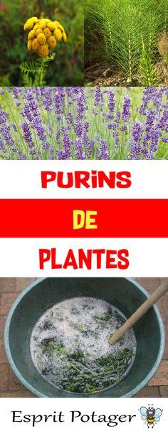 Purins de plantes : fabrication, utilisation et conservation. Découvrez méthodes et conseils pour fabriquer insecticide naturel, stimulant pour plants, engrais potager et soigner votre jardin. Recette du purin d'ortie, purin de consoude, purin de prêle, purin de lavande, purin de pissenlit, purin de fougère, etc...