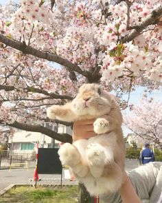 Honey, be bunny ♥ Cute Little Animals, Cute Funny Animals, Cute Baby Bunnies, Cute Babies, Cute Creatures, Beautiful Creatures, Fluffy Animals, Animals And Pets, Animal Pictures