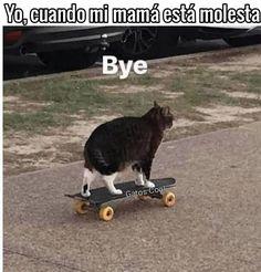 "Gatos Cool en Instagram: ""hasta ma próxima . . . #memesdegatoscool #gatoscool😸 #gatos_cool #gatos #gatitos #bye #adios #mamáenojada #cosasdemamás #mamasmemes…"""