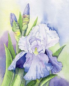 Iris after the Rain  original watercolor by MyColorfulDesign, $45.00