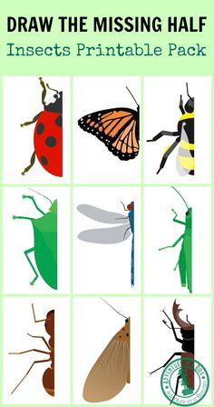 Insect Drawing Prompt: With this free printable, challenge your kids to draw the missing half of an insect. Great for studying entomology, symmetry and developing pre-writing skills! - Draw the Missing Half: Insects Insect Crafts, Insect Art, Insect Activities, Art Activities, Symmetry Activities, Pre Writing, Writing Skills, Kids Writing, Writing Prompts
