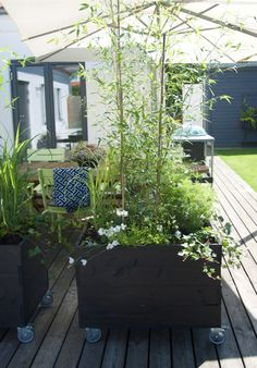 Container Gardening, Terrace, Outdoor Living, Porch, Deck, Yard, Flowers, Plants, Handmade