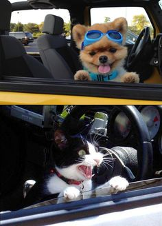 cats vs dogs car rides - CLICK TO SEE MORE PICS OF CATS VS DOGS!!!