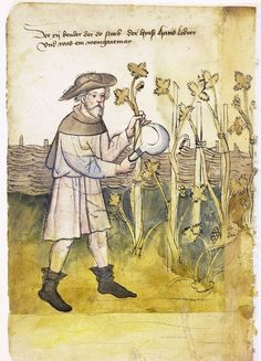 Illustration of a Winemaker, Hans - From the House Books of the Nuremberg Twelve Brothers Foundation, records of a charitable foundation started in the city of Nuremberg in 1388. The foundation would take 12 poor and needy people and provide them with training in a trade. Starting around 1425 their books would contain one-page illustration of the people they had helped, usually giving their name and what profession they were in. - Nuremburg, Germany - c. 1425-1450