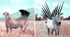 French Artist Creates Fantastical Animal Images In Photoshop, And The Result Is Amazingly Surreal | Bored Panda