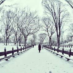 winter @ Central  Park #nyc