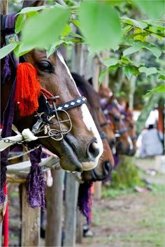 Horses of Kamo Kurabe Uma Festival (Ancient Japanese horse race of religious services started from about 920 years ago) in Kyoto, Japan: photo by Musashi