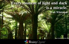 """""""Every moment of light and dark is a mircale""""   - Walt Whitman"""