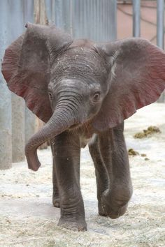 Baby Elephant fun