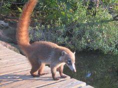 little animal - Picture of Xel-Ha Park, Riviera Maya - TripAdvisor