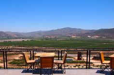 Guide to Mexico's Wine Country