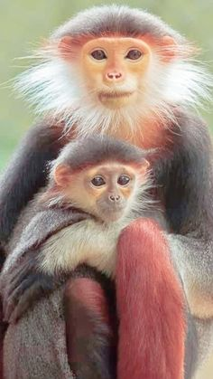 Animals Beautiful, Cute Animals, Art Of Living, Animal Pictures, Wildlife, Kawaii, Exotic Animals, Dog Cat, Nature